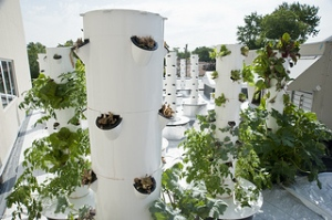 Aeroponics gardening is somewhat as it sounds: the process of growing plants in the air, supported by a mist of nutrient rich water to the exposed roots. We are lucky to have such innovation, right here in Blue Island! Stop by today to take a look.